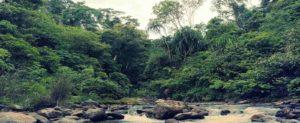 Trek en Gunung Leuser,Sumatra,Indonesia con Indika Viajes