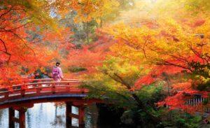 Puente de madera en Kyoto, Otoño- Viaje a Japon. Indika Viajes